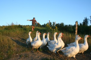Suzanne Podhaizer with pastured geese