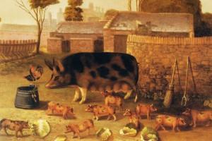 PLUMPUDDING_PIGS